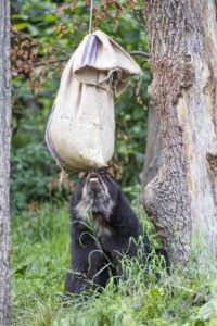 bear with food bag